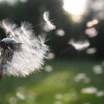 Kontaktlinsen bei Allergien, Heuschnupfen und Medikamenten